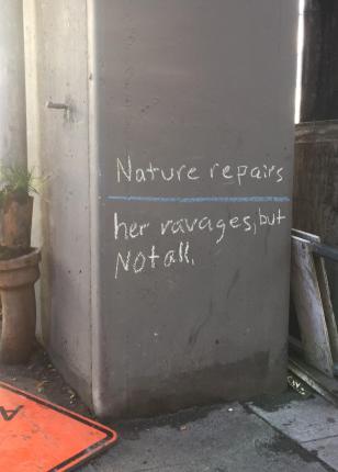 Nature repairs